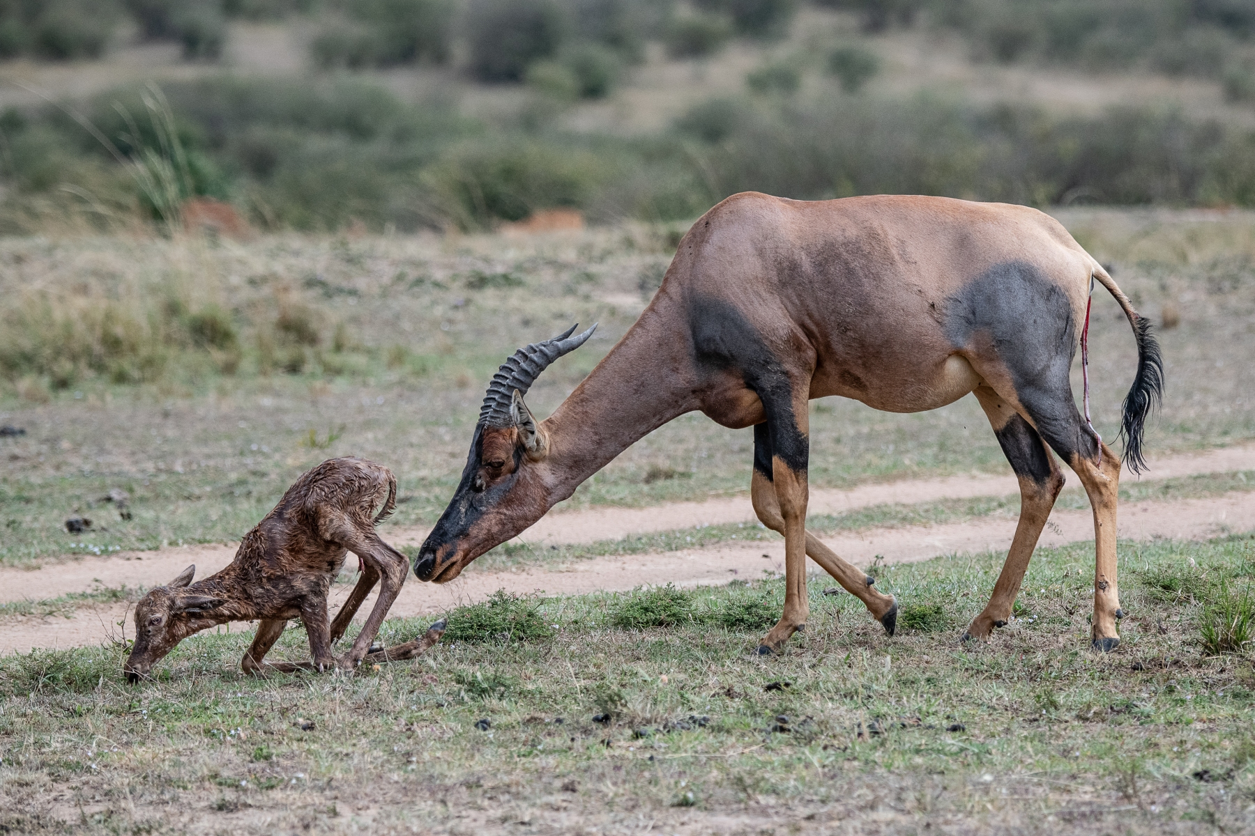 Topi Mother and newborn