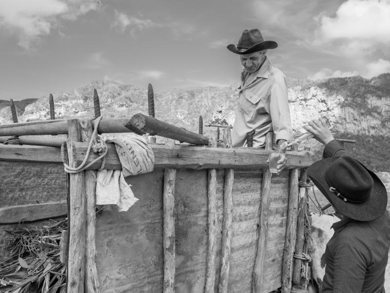 Sharing rum in an ox cart