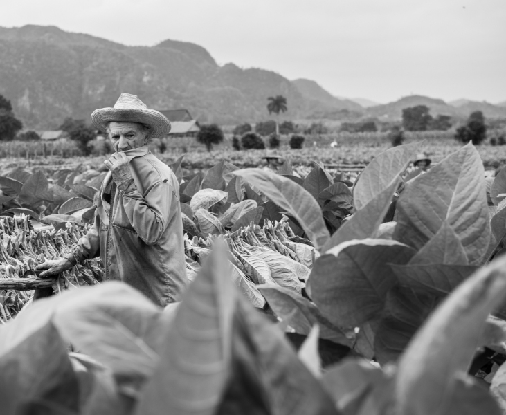 Tobacco farmer in Vinales Valley Cuba
