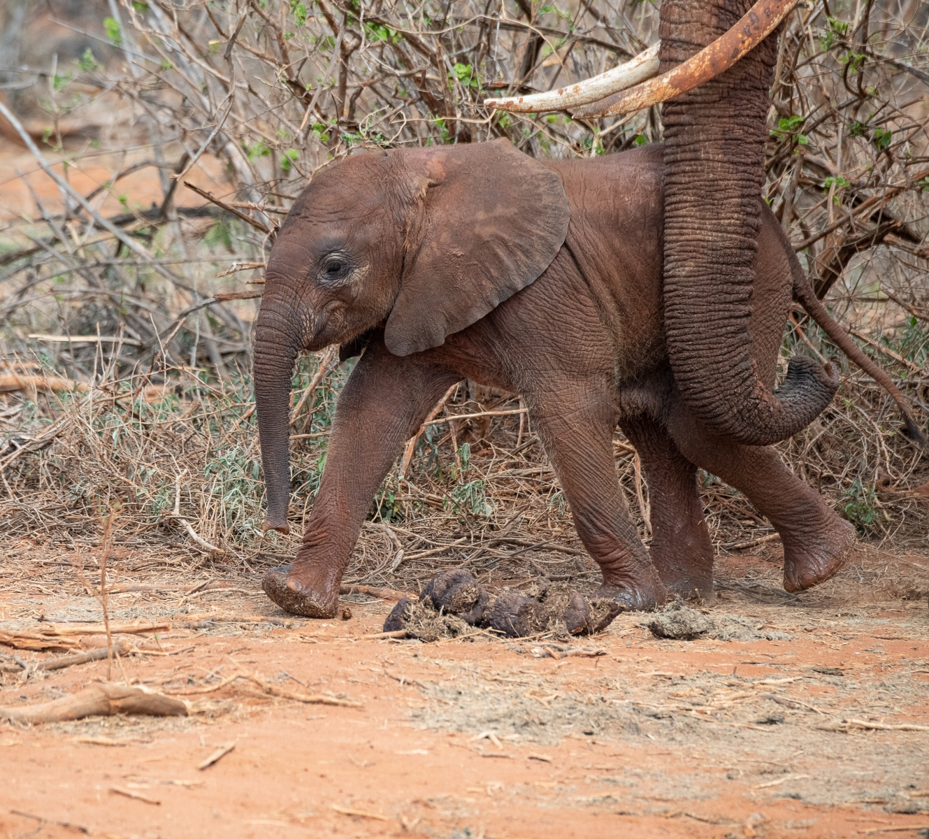 mother-and-baby-elephant-5323