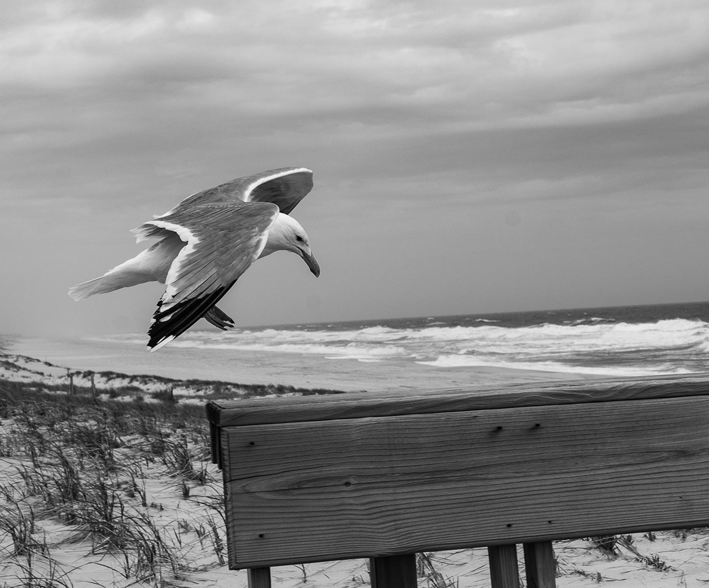 seagull-landing-1