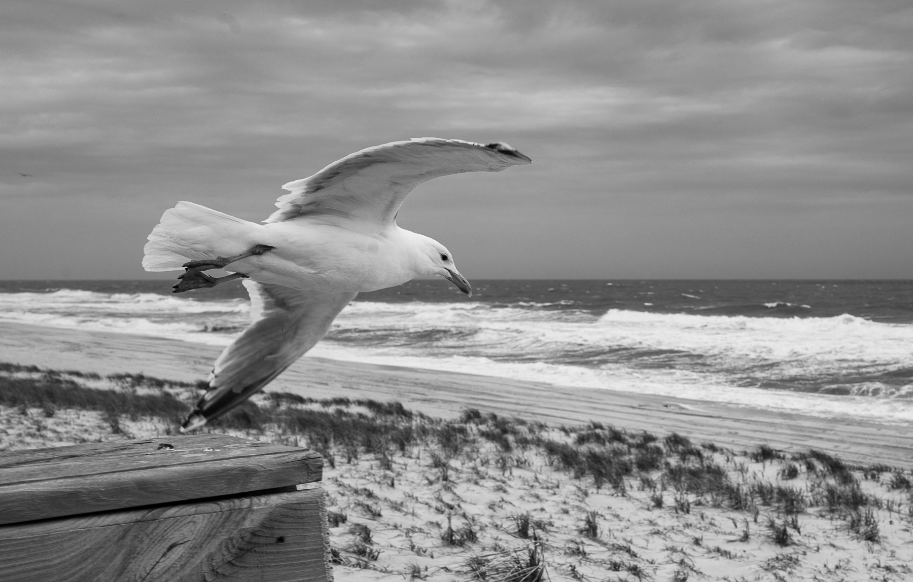 seagull-on-windy-day-5585