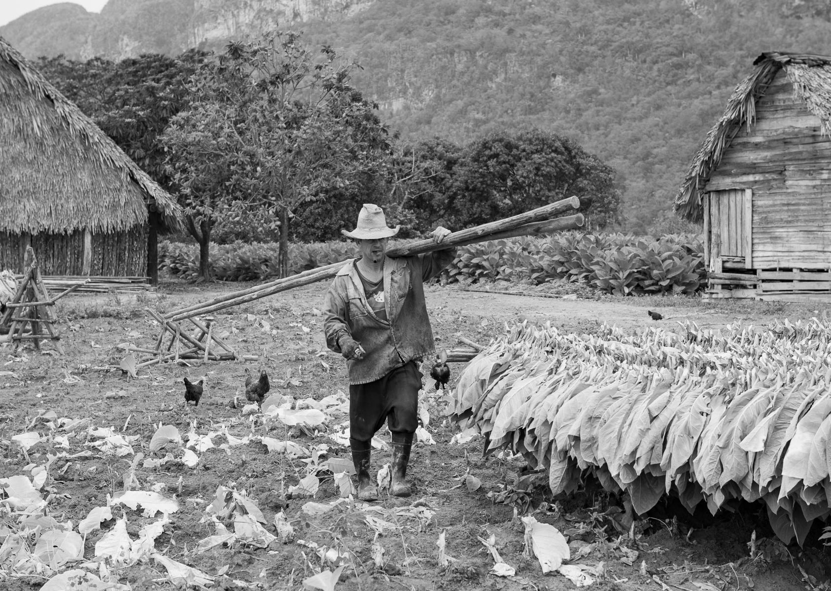 tobacco-farmer-Cuba-6609