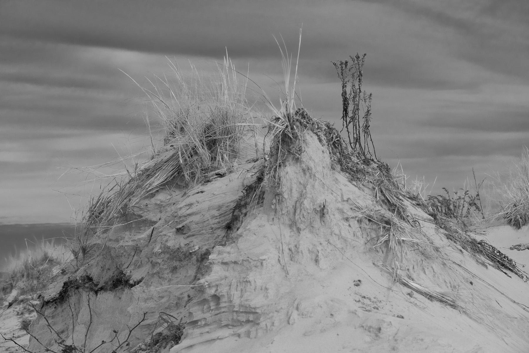 winter-dune-grass-LBI-6232