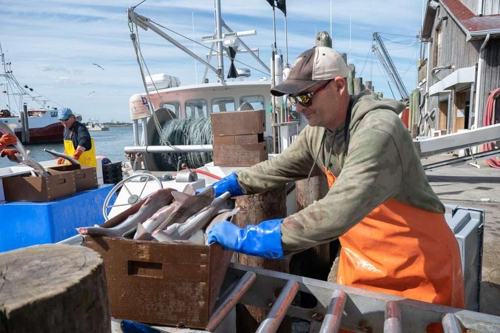 unloading dog fish